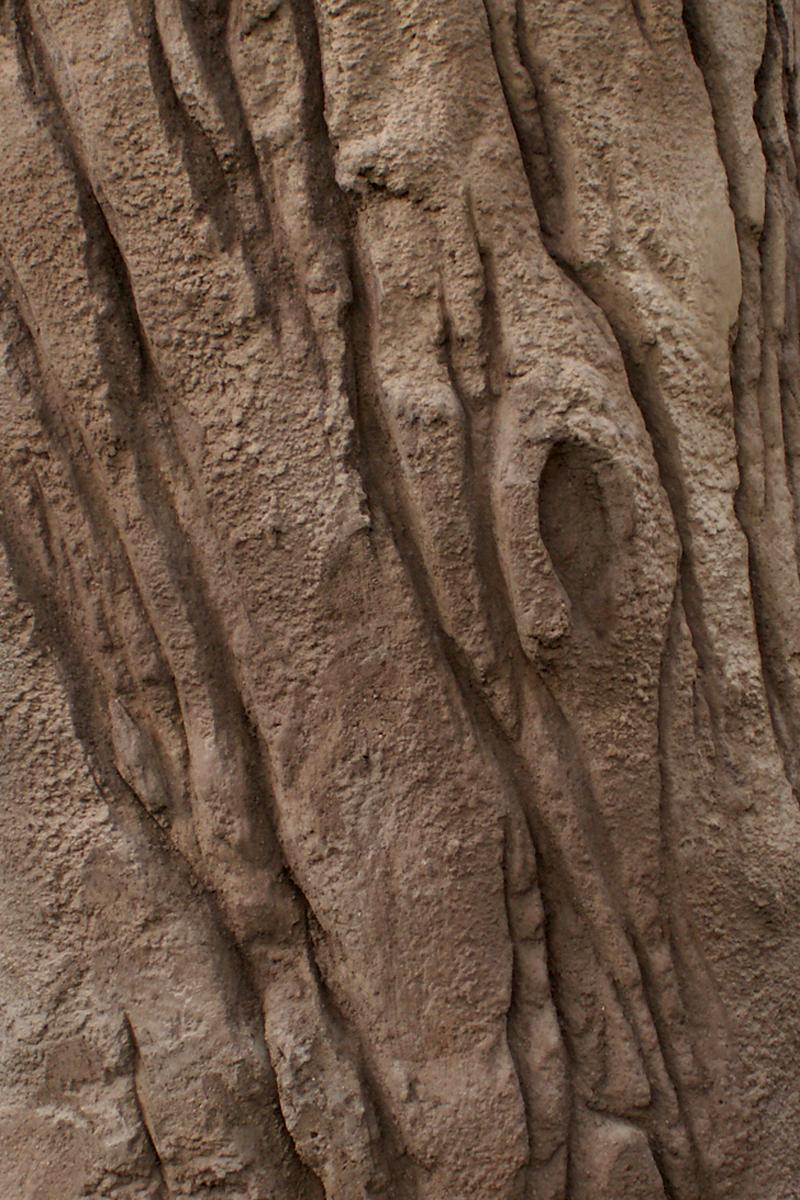 Strukturdetail Baumstamm