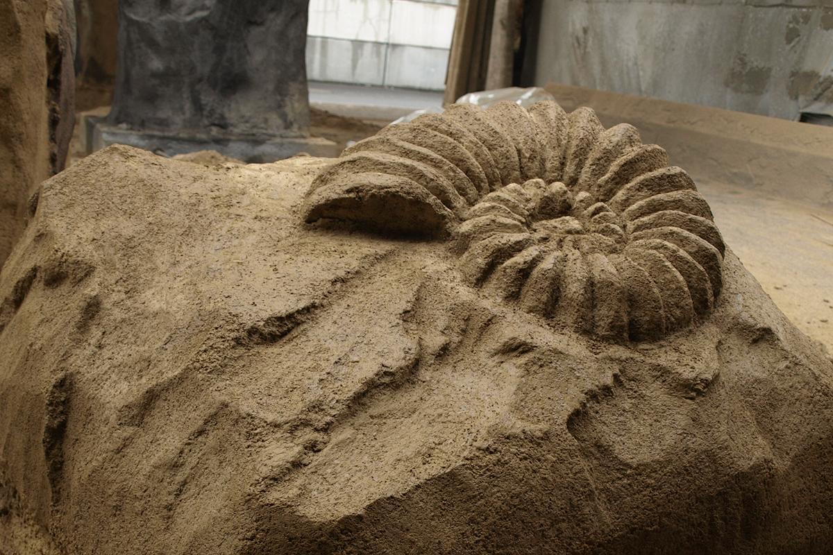 Ammonit Mutchborugh 2017